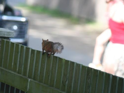 Aial jalutav orav