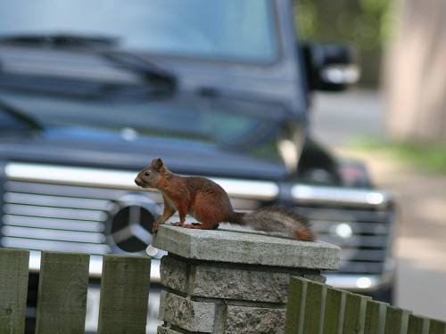 Aial istuv orav