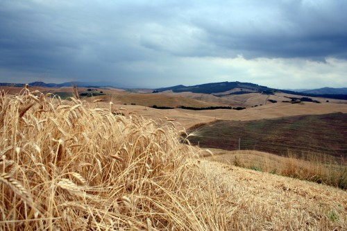 Itaalia põllud