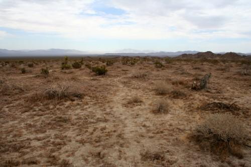 Joshua Tree National Park - Kõrb