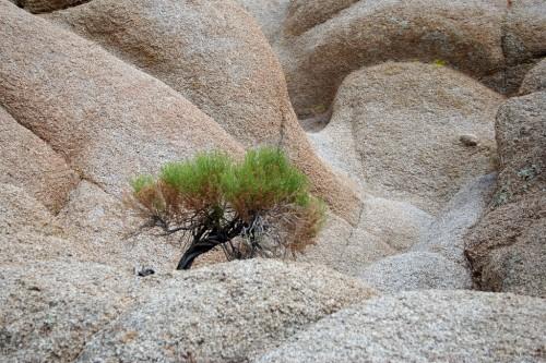 Kivil kasvav puu