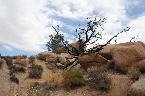 Kuivanud puu