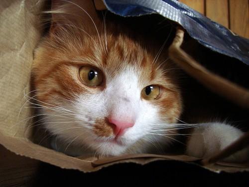 Kass kinkekotis