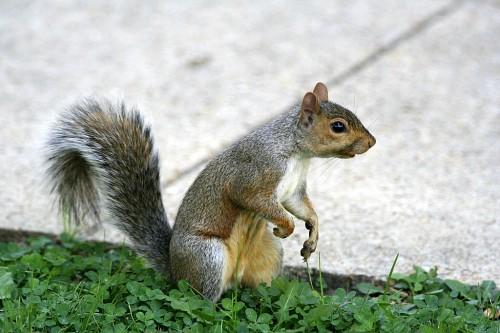 Washington DC orav