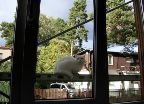 Kass akna taga tellingutel