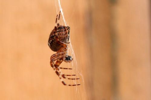 Ämbliku hommikusöök