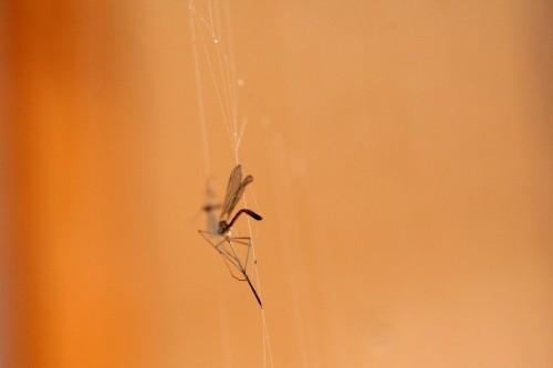 Ämbliku saak